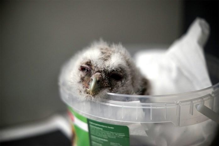 Minder jonge diertjes in Natuurhulpcentrum: noodplan ligt klaar voor als het drukker wordt