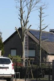 Lanakenaar (67) omgekomen bij snoeiwerken in boom