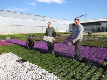"""Marktkramers mogen bloemen niet verkopen: """"Deze broodroof kost ons 100.000 euro"""""""