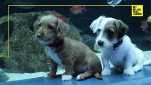 Aquarium krijgt geen bezoekers meer door corona, dan nemen schattige puppy's het over