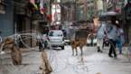 "Indiase goeroe én ""superverspreider"" overleden: ""Weigerde in quarantaine te gaan"""