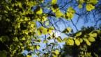 Lente hangt in de lucht: volgend weekend zonnig en warm tot twintig graden