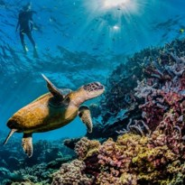 David Attenborough neemt je mee op een virtuele tour langs het Great Barrier Reef