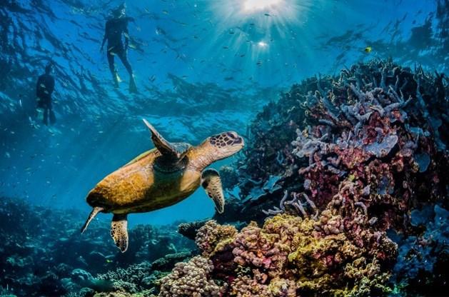 David Attenborough neemt je mee op een virtuele tour langs het Great Barrier Reef