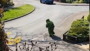 Man gebruikt geniale vermomming om buiten te komen tijdens lockdown