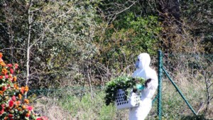 Wietplantage ontdekt in huis van Amerikaanse militair