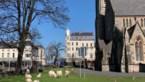 Wilde geiten dwalen door verlaten straten in Wales na lockdown