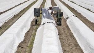 Miljoen mensen zit thuis, maar asperges raken niet van het veld