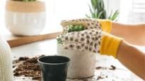 Lente in huis: drie makkelijke manieren om je geliefde plantjes te stekken