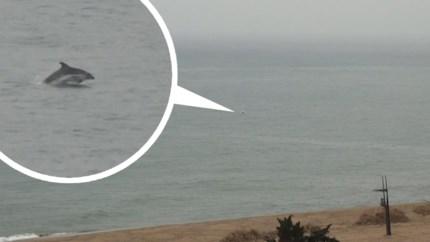 Lichtpunt in tijden van corona: burgers verbaasd door plotse opkomst dolfijnen langs Spaanse kust
