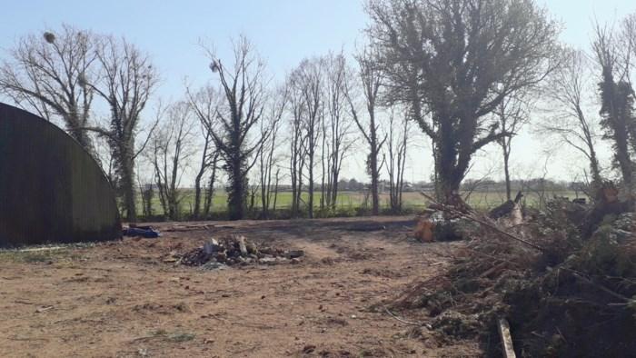 """Onderaannemer vernielt waardevol natuurgebied in Bilzen: """"Een zware overtreding"""""""