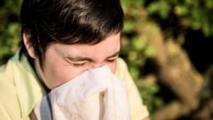 Wie lijdt aan hooikoorts start dit seizoen best vroegtijdig met medicatie