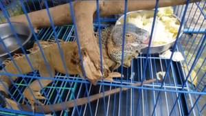 Greenpeace vraagt verbod op wereldwijde handel in dieren