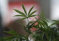 Ex-koppel krijgt 18 maanden cel voor cannabisplantage in huurhuis in Maaseik