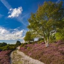 Uittip als reizen weer mag: het eerste 'super' natuurreservaat in het VK