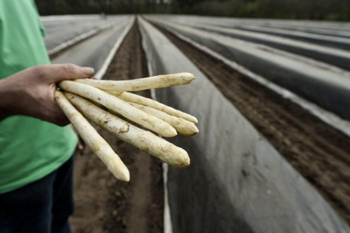 Overheid werkt aan regeling om meer asielzoekers in te zetten als seizoensarbeider