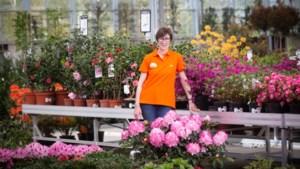 Tuincentra wachten op groen licht, maar het moet veilig kunnen