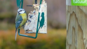 Zo bescherm je je ramen tegen agressieve, concurrerende mannetjesvogels