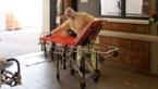 Jessa Ziekenhuis en Ziekenhuis Maas en Kempen sturen artsen naar woonzorgcentra