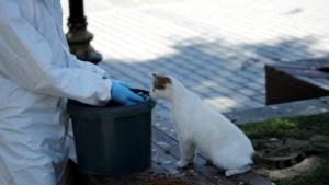 """Baasje ziek, kat in quarantaine: """"We raden zelfs aparte kamer aan"""""""