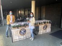 Kiwanis Maaseik zet het personeel van woonzorgcentrum Maaspoorte in de bloemetjes