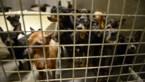 Ruim 7 op de 10 Vlaamse dierenasielen vragen Vlaamse subsidies