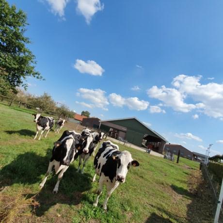 Bocholter boerderijleven ontdekken