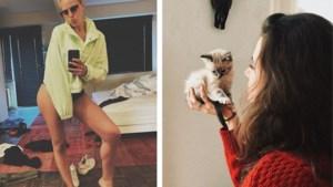 Gluren bij BV's: opruimen gaat mis bij Eline De Munck, honden laten Gert Verhulst niet los