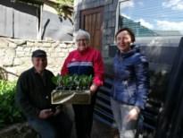 Samana Genoelselderen brengt meiklokjes bij 80-plussers