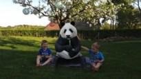 DOEN. Picknick met een panda of poseren met een tijger? Dankzij Google kan het