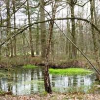 Mooie natuur in Hamont - Achel