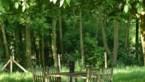 Waarom een gewone boom in de tuin beter koelt dan tien airco's