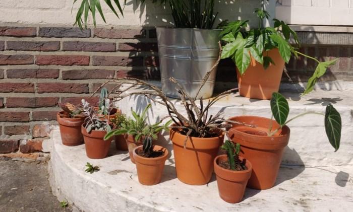 Plantenverhuis: deze planten kunnen binnen én buiten