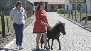 Tongers blindengeleidepaardje vocht voor leven na vergiftiging, maar is nu afgekeurd