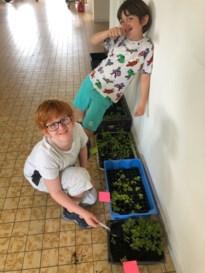 Leerlingen methodeschool Ondersteboven kweken groentjes dankzij Tuinhier