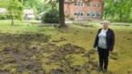 """Everzwijnen ploegen weide van Kiewitse B&B om: """"Overal gaten, kraters bijna"""""""