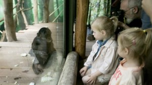 Zo zal een bezoek aan de dierentuin eruitzien: coronastewards en geen restaurants