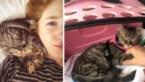 Waarom straatkat Lee uit Peru een spuitje moet krijgen