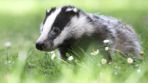"""Nieuw dagrecord in Natuurhulpcentrum: """"Op de kop 100 inheemse dieren binnengebracht"""""""