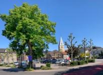Honderdjarige vredesboom van Zutendaal wordt geveld