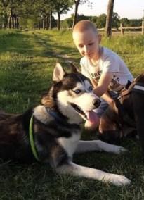 Loslopende husky meegenomen in Vliermaal