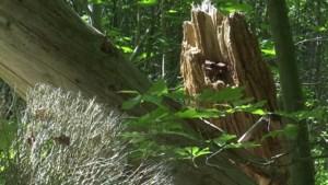Vlaamse regering geeft fiat voor industrie in Groene Delle: 23 hectare natuur verdwijnt