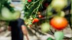 KOKEN. De beste recepten met de lekkerste ingrediënten van Limburgse bodem