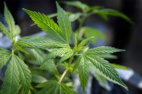 Cannabis verstopt in dakgoot