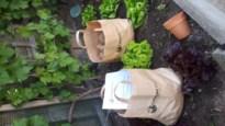 Landelijke Gilde Zichen-Zussen-Bolder schenkt leden een zakje aardappelen