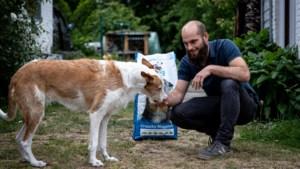 In Diepenbeek opent eerste winkel voor vegetarische honden