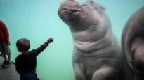 De dierentuinen openen hun poorten: hier kan je naar de beestjes gaan kijken