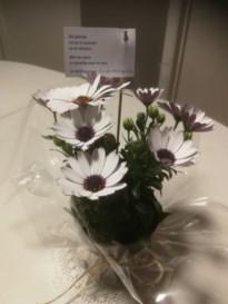 Neos Oudsbergen fleurt leden op met een bloemetje