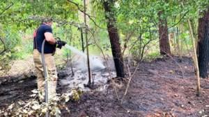 Brandweer moet twee keer uitrukken voor bosbrandje in Genk