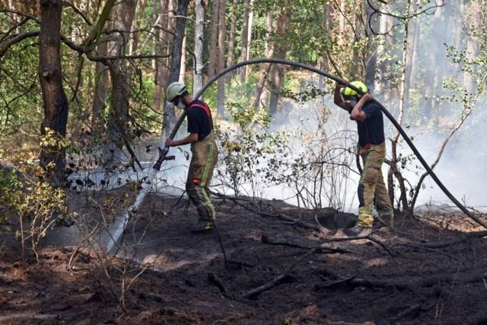 Zoveelste brand in bosje aan Ekselse villawijk: politie start onderzoek